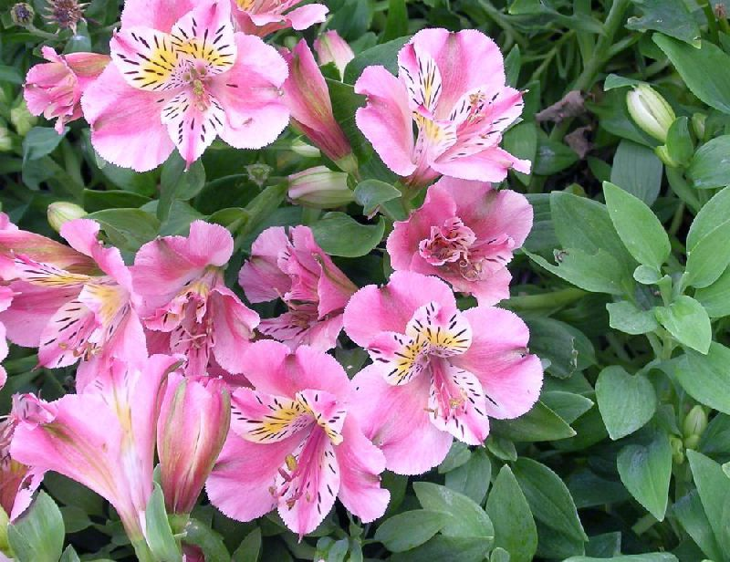 Сочетание цветов домашние цветы