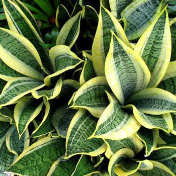Неприхотливые комнатные растения