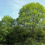 польза деревьев