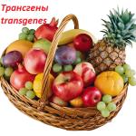 трансгены